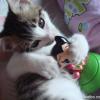 my pet cat - Bubbles